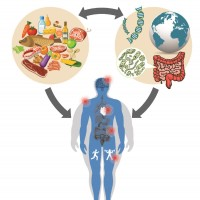 infographic that defines Precision Nutrition as how food affects the human body's health
