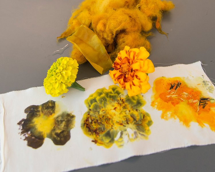 flower and dye samples