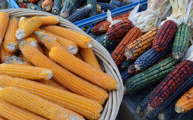 various types of corn