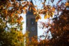 fall leaves with clocktower in the background